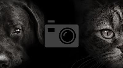 Постер-картина Фото-постеры Темная морда лабрадора собаки и кошки Шотландская, 36x20 см, на бумагеГлаза<br>Постер на холсте или бумаге. Любого нужного вам размера. В раме или без. Подвес в комплекте. Трехслойная надежная упаковка. Доставим в любую точку России. Вам осталось только повесить картину на стену!<br>