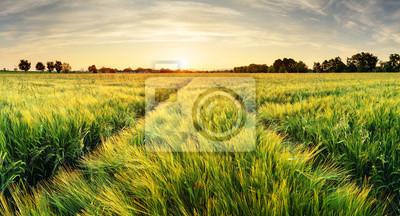 Постер Рассвет Пшеничное поле пейзаж с путь во время закатаРассвет<br>Постер на холсте или бумаге. Любого нужного вам размера. В раме или без. Подвес в комплекте. Трехслойная надежная упаковка. Доставим в любую точку России. Вам осталось только повесить картину на стену!<br>