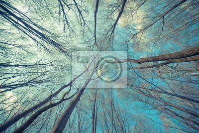 Постер-картина На потолок Деревья Фона ВебНа потолок<br>Постер на холсте или бумаге. Любого нужного вам размера. В раме или без. Подвес в комплекте. Трехслойная надежная упаковка. Доставим в любую точку России. Вам осталось только повесить картину на стену!<br>