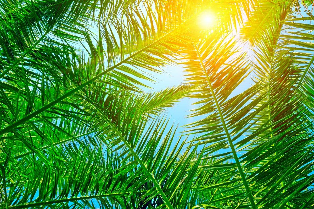 Постер Фон из пальмовых листьев и голубое небо.Пальма<br>Постер на холсте или бумаге. Любого нужного вам размера. В раме или без. Подвес в комплекте. Трехслойная надежная упаковка. Доставим в любую точку России. Вам осталось только повесить картину на стену!<br>