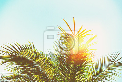 Постер Листья пальмового дерева Пальма<br>Постер на холсте или бумаге. Любого нужного вам размера. В раме или без. Подвес в комплекте. Трехслойная надежная упаковка. Доставим в любую точку России. Вам осталось только повесить картину на стену!<br>