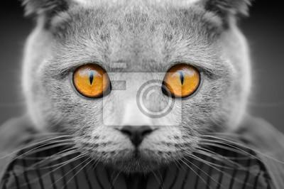 Постер-картина Фото-постеры Серый кот портрет, 30x20 см, на бумагеГлаза<br>Постер на холсте или бумаге. Любого нужного вам размера. В раме или без. Подвес в комплекте. Трехслойная надежная упаковка. Доставим в любую точку России. Вам осталось только повесить картину на стену!<br>