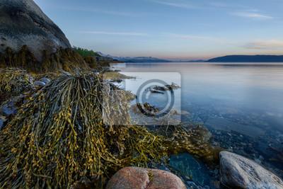 Постер Вечер Море с водорослями, НорвегияВечер<br>Постер на холсте или бумаге. Любого нужного вам размера. В раме или без. Подвес в комплекте. Трехслойная надежная упаковка. Доставим в любую точку России. Вам осталось только повесить картину на стену!<br>