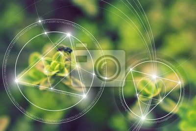Сакральная геометрия. Математики, природы и духовности в природе. Формула природы. Нет начала и конца Вселенной, нет начала и нет конца жизни и блаженства., 30x20 см, на бумагеЗолотое сечение, числа Фибоначчи<br>Постер на холсте или бумаге. Любого нужного вам размера. В раме или без. Подвес в комплекте. Трехслойная надежная упаковка. Доставим в любую точку России. Вам осталось только повесить картину на стену!<br>