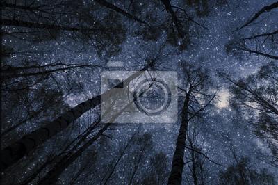 Постер Ночь Снизу смотреть на звездное небо в лесу ночью. СилуэтНочь<br>Постер на холсте или бумаге. Любого нужного вам размера. В раме или без. Подвес в комплекте. Трехслойная надежная упаковка. Доставим в любую точку России. Вам осталось только повесить картину на стену!<br>