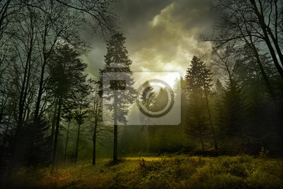Постер Туман Волшебный темный лес. Осенний лесной пейзаж с лучами теплого светаТуман<br>Постер на холсте или бумаге. Любого нужного вам размера. В раме или без. Подвес в комплекте. Трехслойная надежная упаковка. Доставим в любую точку России. Вам осталось только повесить картину на стену!<br>