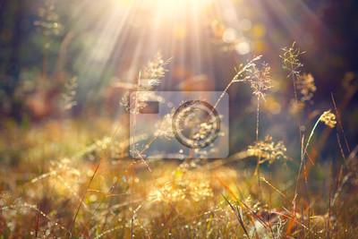 Постер Туман Красивая природа фон. Осенней травы с утренней росой в солнечном свете крупным планомТуман<br>Постер на холсте или бумаге. Любого нужного вам размера. В раме или без. Подвес в комплекте. Трехслойная надежная упаковка. Доставим в любую точку России. Вам осталось только повесить картину на стену!<br>