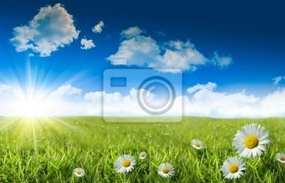 Постер Пейзаж равнинный Дикие маргаритки в траве с голубым небомПейзаж равнинный<br>Постер на холсте или бумаге. Любого нужного вам размера. В раме или без. Подвес в комплекте. Трехслойная надежная упаковка. Доставим в любую точку России. Вам осталось только повесить картину на стену!<br>