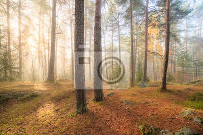 Постер Утро Туманный утренний свет солнца лесуУтро<br>Постер на холсте или бумаге. Любого нужного вам размера. В раме или без. Подвес в комплекте. Трехслойная надежная упаковка. Доставим в любую точку России. Вам осталось только повесить картину на стену!<br>