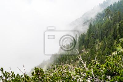 Постер Утро Зеленый сосновый лес в тумане в национальном парке Олимп, ГрецияУтро<br>Постер на холсте или бумаге. Любого нужного вам размера. В раме или без. Подвес в комплекте. Трехслойная надежная упаковка. Доставим в любую точку России. Вам осталось только повесить картину на стену!<br>