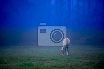 Постер Ночь Лошадь на туманная ночь в поле в окружении лесаНочь<br>Постер на холсте или бумаге. Любого нужного вам размера. В раме или без. Подвес в комплекте. Трехслойная надежная упаковка. Доставим в любую точку России. Вам осталось только повесить картину на стену!<br>