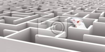 Постер-картина Лабиринт Белые мыши в Белый лабиринт, глядя на стеныЛабиринт<br>Постер на холсте или бумаге. Любого нужного вам размера. В раме или без. Подвес в комплекте. Трехслойная надежная упаковка. Доставим в любую точку России. Вам осталось только повесить картину на стену!<br>