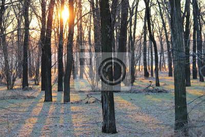 Постер Утро Утреннее солнце сквозь деревья в зимнем лесу. Лес с инеем в солнечных лучей в зимний сезонУтро<br>Постер на холсте или бумаге. Любого нужного вам размера. В раме или без. Подвес в комплекте. Трехслойная надежная упаковка. Доставим в любую точку России. Вам осталось только повесить картину на стену!<br>