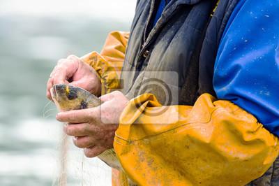 Рыбак извлекать рыбу из рыболовной сети., 30x20 см, на бумагеРыбное производство<br>Постер на холсте или бумаге. Любого нужного вам размера. В раме или без. Подвес в комплекте. Трехслойная надежная упаковка. Доставим в любую точку России. Вам осталось только повесить картину на стену!<br>