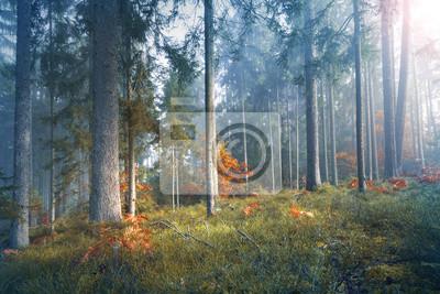 Постер Утро Мистический свет в туманном сезонный лес дерево пейзаж.Утро<br>Постер на холсте или бумаге. Любого нужного вам размера. В раме или без. Подвес в комплекте. Трехслойная надежная упаковка. Доставим в любую точку России. Вам осталось только повесить картину на стену!<br>