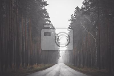 Постер Утро Пустой асфальт Кривой дороге в туманный день в лесу. Тонированное изображениеУтро<br>Постер на холсте или бумаге. Любого нужного вам размера. В раме или без. Подвес в комплекте. Трехслойная надежная упаковка. Доставим в любую точку России. Вам осталось только повесить картину на стену!<br>