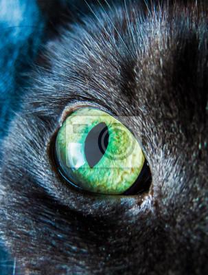 Желтый зеленый деградированных кошачий глаз, сделанные с естественным источником света., 20x26 см, на бумагеГлаза<br>Постер на холсте или бумаге. Любого нужного вам размера. В раме или без. Подвес в комплекте. Трехслойная надежная упаковка. Доставим в любую точку России. Вам осталось только повесить картину на стену!<br>