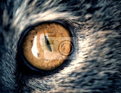 Постер-картина Фото-постеры Крупным планом желтый кошачий глаз серый мех, 26x20 см, на бумагеГлаза<br>Постер на холсте или бумаге. Любого нужного вам размера. В раме или без. Подвес в комплекте. Трехслойная надежная упаковка. Доставим в любую точку России. Вам осталось только повесить картину на стену!<br>
