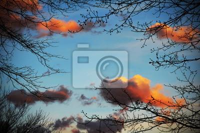 Постер-картина На потолок Голубое небо с красными облаками и ветками деревьевНа потолок<br>Постер на холсте или бумаге. Любого нужного вам размера. В раме или без. Подвес в комплекте. Трехслойная надежная упаковка. Доставим в любую точку России. Вам осталось только повесить картину на стену!<br>