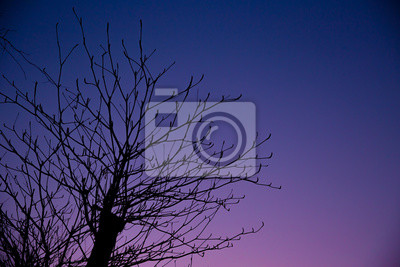Постер Ночь Одинокая ночь, лето осень сезон красивого заката небо с деревом силуэт.Ночь<br>Постер на холсте или бумаге. Любого нужного вам размера. В раме или без. Подвес в комплекте. Трехслойная надежная упаковка. Доставим в любую точку России. Вам осталось только повесить картину на стену!<br>