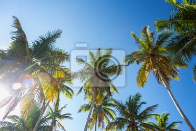 Постер-картина На потолок Вид снизу на пальмы в солнечном свете на фоне голубого небаНа потолок<br>Постер на холсте или бумаге. Любого нужного вам размера. В раме или без. Подвес в комплекте. Трехслойная надежная упаковка. Доставим в любую точку России. Вам осталось только повесить картину на стену!<br>