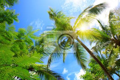 Постер-картина На потолок Красивым тропическим солнцем с пальмами и солнцем.На потолок<br>Постер на холсте или бумаге. Любого нужного вам размера. В раме или без. Подвес в комплекте. Трехслойная надежная упаковка. Доставим в любую точку России. Вам осталось только повесить картину на стену!<br>