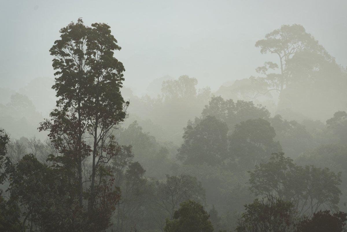 Постер Дождь Утренний туман в густом тропическом лесу, ТаиландДождь<br>Постер на холсте или бумаге. Любого нужного вам размера. В раме или без. Подвес в комплекте. Трехслойная надежная упаковка. Доставим в любую точку России. Вам осталось только повесить картину на стену!<br>