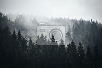 Постер Дождь Туман в норвежском лесуДождь<br>Постер на холсте или бумаге. Любого нужного вам размера. В раме или без. Подвес в комплекте. Трехслойная надежная упаковка. Доставим в любую точку России. Вам осталось только повесить картину на стену!<br>