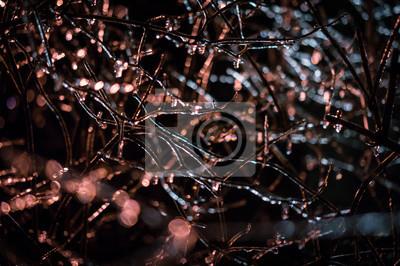 Постер Дождь Ледяной дождь на ветках дерева - ночная сцена с ДОФ и уличный свет окружающей средыДождь<br>Постер на холсте или бумаге. Любого нужного вам размера. В раме или без. Подвес в комплекте. Трехслойная надежная упаковка. Доставим в любую точку России. Вам осталось только повесить картину на стену!<br>
