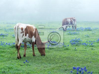 Постер Туман Техасский Лонгхорн корова пасется на лугу с цветущими люпинами ранним утром в туманеТуман<br>Постер на холсте или бумаге. Любого нужного вам размера. В раме или без. Подвес в комплекте. Трехслойная надежная упаковка. Доставим в любую точку России. Вам осталось только повесить картину на стену!<br>