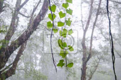 Постер Дождь Растение в тропических лесахДождь<br>Постер на холсте или бумаге. Любого нужного вам размера. В раме или без. Подвес в комплекте. Трехслойная надежная упаковка. Доставим в любую точку России. Вам осталось только повесить картину на стену!<br>