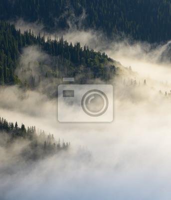 Постер Туман Осенний пейзаж с еловым лесом на склонах горТуман<br>Постер на холсте или бумаге. Любого нужного вам размера. В раме или без. Подвес в комплекте. Трехслойная надежная упаковка. Доставим в любую точку России. Вам осталось только повесить картину на стену!<br>
