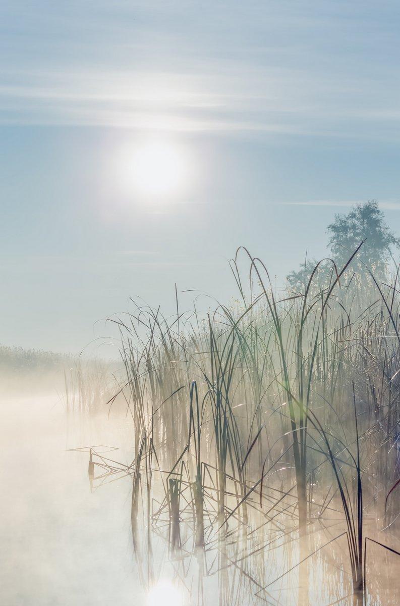 Постер Туман Реки с камышом, отражается в дельте реки Волга на туманный рассвет, РоссияТуман<br>Постер на холсте или бумаге. Любого нужного вам размера. В раме или без. Подвес в комплекте. Трехслойная надежная упаковка. Доставим в любую точку России. Вам осталось только повесить картину на стену!<br>