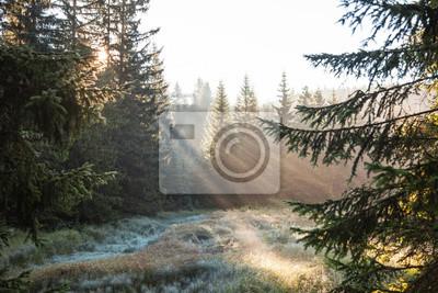 Постер Туман Хвойные и сосновые леса на рассвете в лучах солнечного света. Прекрасный вид через елки и туман от мороза траве утром.Туман<br>Постер на холсте или бумаге. Любого нужного вам размера. В раме или без. Подвес в комплекте. Трехслойная надежная упаковка. Доставим в любую точку России. Вам осталось только повесить картину на стену!<br>