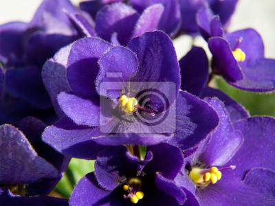 Красивые фиолетовые цветы, 27x20 см, на бумагеФиалки<br>Постер на холсте или бумаге. Любого нужного вам размера. В раме или без. Подвес в комплекте. Трехслойная надежная упаковка. Доставим в любую точку России. Вам осталось только повесить картину на стену!<br>