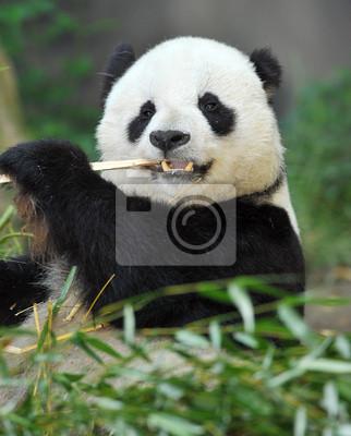 Постер Панда