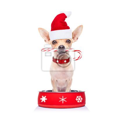 Постер Праздники Голоден Дед Мороз собака внутри миски, 20x20 см, на бумаге12.31 Новый Год<br>Постер на холсте или бумаге. Любого нужного вам размера. В раме или без. Подвес в комплекте. Трехслойная надежная упаковка. Доставим в любую точку России. Вам осталось только повесить картину на стену!<br>