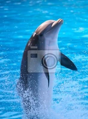 Постер Подводный мир Дельфин, 20x27 см, на бумагеДельфины<br>Постер на холсте или бумаге. Любого нужного вам размера. В раме или без. Подвес в комплекте. Трехслойная надежная упаковка. Доставим в любую точку России. Вам осталось только повесить картину на стену!<br>