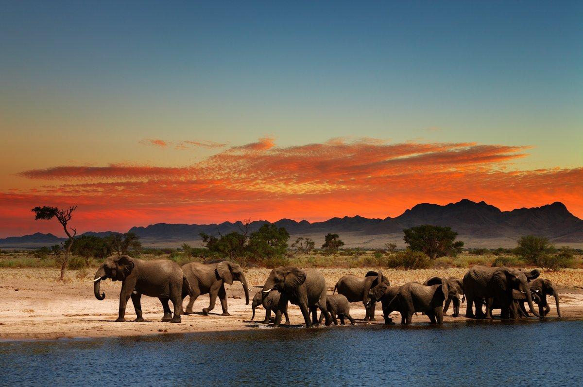 Постер Животные Стадо слонов в Африканской саванне, 30x20 см, на бумагеСлоны<br>Постер на холсте или бумаге. Любого нужного вам размера. В раме или без. Подвес в комплекте. Трехслойная надежная упаковка. Доставим в любую точку России. Вам осталось только повесить картину на стену!<br>