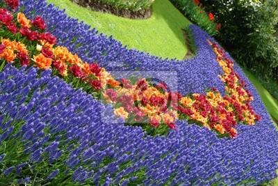 Постер Гиацинты Весенний цветок кровать в Кекенхоф сады, НидерландыГиацинты<br>Постер на холсте или бумаге. Любого нужного вам размера. В раме или без. Подвес в комплекте. Трехслойная надежная упаковка. Доставим в любую точку России. Вам осталось только повесить картину на стену!<br>