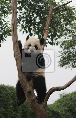 Panda, 20x31 см, на бумагеПанда<br>Постер на холсте или бумаге. Любого нужного вам размера. В раме или без. Подвес в комплекте. Трехслойная надежная упаковка. Доставим в любую точку России. Вам осталось только повесить картину на стену!<br>