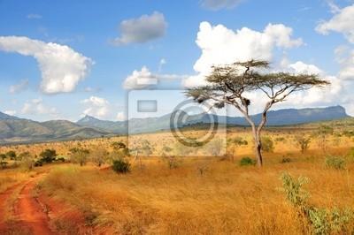 Постер Африканский пейзаж ДеревоАфриканский пейзаж<br>Постер на холсте или бумаге. Любого нужного вам размера. В раме или без. Подвес в комплекте. Трехслойная надежная упаковка. Доставим в любую точку России. Вам осталось только повесить картину на стену!<br>