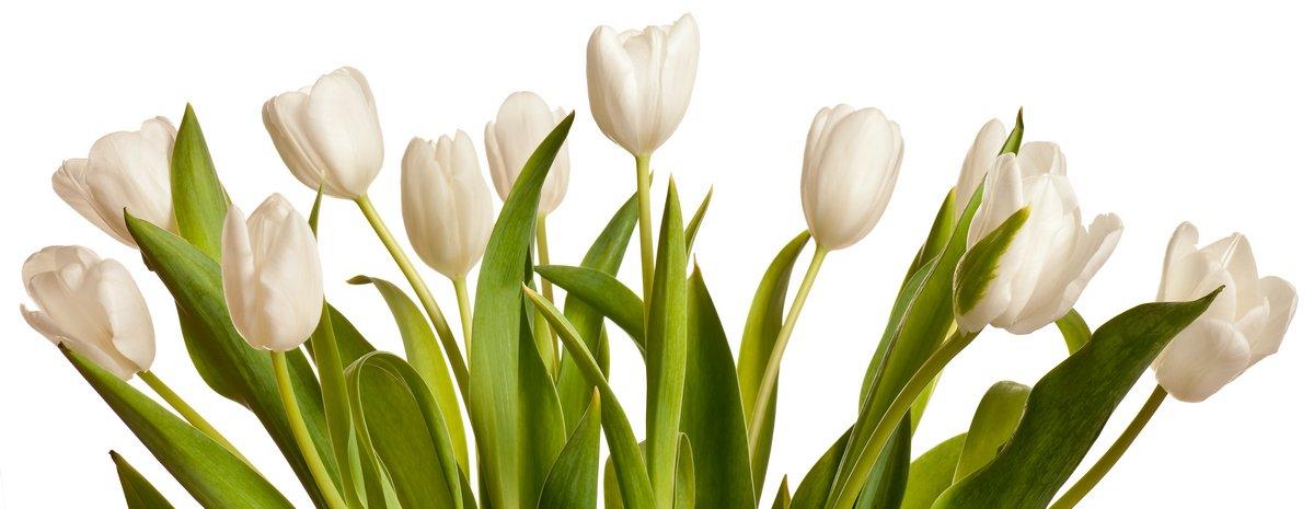 Постер Тюльпаны Весна Тюльпаны в беломТюльпаны<br>Постер на холсте или бумаге. Любого нужного вам размера. В раме или без. Подвес в комплекте. Трехслойная надежная упаковка. Доставим в любую точку России. Вам осталось только повесить картину на стену!<br>