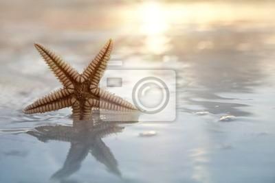 Постер Подводный мир Shell морские звезды в море на фоне солнца, 30x20 см, на бумагеМорские звезды<br>Постер на холсте или бумаге. Любого нужного вам размера. В раме или без. Подвес в комплекте. Трехслойная надежная упаковка. Доставим в любую точку России. Вам осталось только повесить картину на стену!<br>