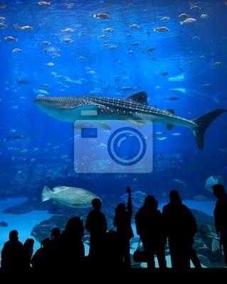 Большой Аквариум - Люди Силуэт, китовая акула, 20x25 см, на бумагеАкулы<br>Постер на холсте или бумаге. Любого нужного вам размера. В раме или без. Подвес в комплекте. Трехслойная надежная упаковка. Доставим в любую точку России. Вам осталось только повесить картину на стену!<br>