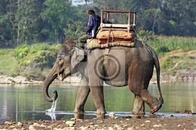 Постер Слоны Слон и погонщика на река в НепалеСлоны<br>Постер на холсте или бумаге. Любого нужного вам размера. В раме или без. Подвес в комплекте. Трехслойная надежная упаковка. Доставим в любую точку России. Вам осталось только повесить картину на стену!<br>
