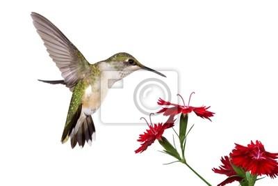 Постер Гвоздики Hummingbird и три гвоздикаГвоздики<br>Постер на холсте или бумаге. Любого нужного вам размера. В раме или без. Подвес в комплекте. Трехслойная надежная упаковка. Доставим в любую точку России. Вам осталось только повесить картину на стену!<br>