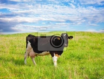 Постер Коровы Черная корова на лугуКоровы<br>Постер на холсте или бумаге. Любого нужного вам размера. В раме или без. Подвес в комплекте. Трехслойная надежная упаковка. Доставим в любую точку России. Вам осталось только повесить картину на стену!<br>