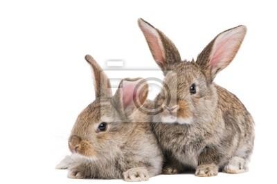 Постер Животные Два ребенка кроликов, изолированных на белом, 30x20 см, на бумагеКролики<br>Постер на холсте или бумаге. Любого нужного вам размера. В раме или без. Подвес в комплекте. Трехслойная надежная упаковка. Доставим в любую точку России. Вам осталось только повесить картину на стену!<br>
