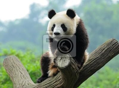 Гигантский медведь панда в дерево, 27x20 см, на бумагеПанда<br>Постер на холсте или бумаге. Любого нужного вам размера. В раме или без. Подвес в комплекте. Трехслойная надежная упаковка. Доставим в любую точку России. Вам осталось только повесить картину на стену!<br>